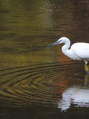 魚を待ち構える鳥