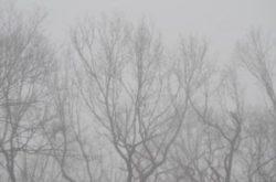 霧のかかった林